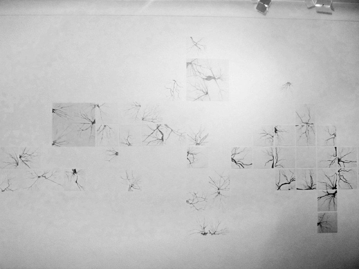Uma Linguagem – Quatro olhares | Fotos: Rene Cabrales