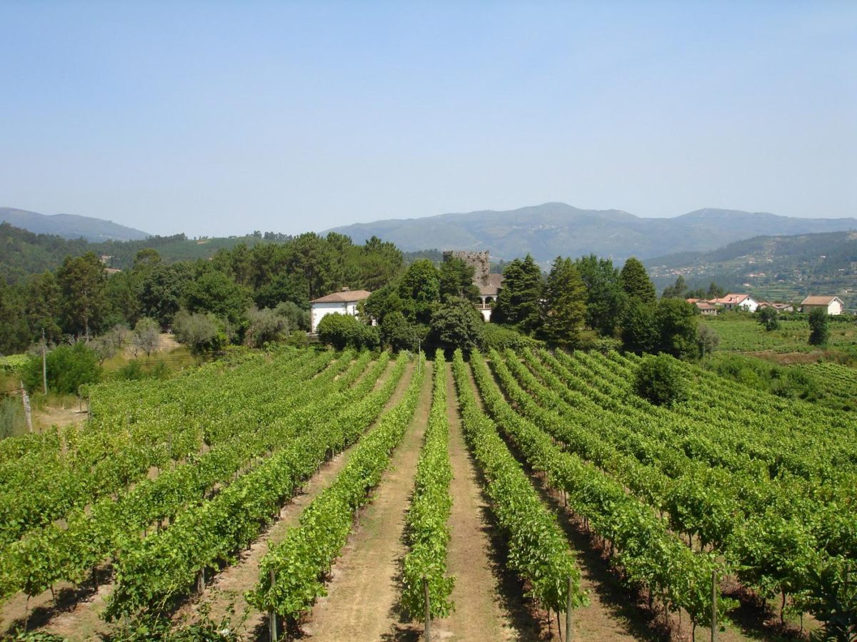 Portugal: Vinho Verde | Foto: Silvia Mascella Rosa/Divulgação