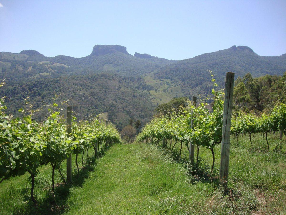 Uva, Terroirs e Vinhos | Foto: Arquivo Pessoal