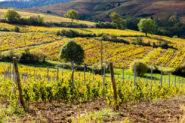 Núcleo Cultural do Vinho | Foto: Divulgação
