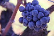 vinícola boscato (3) | Foto: Vinícola Boscato/Divulgação