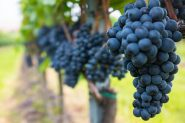 uvas e vinhos | Foto: Divulgação