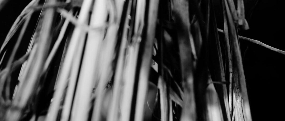 2º Fivrs – Atotoó – Interditos e mistérios do negrocorpo, Caroline Ribeiro Paz, Bárbara Cezano – Pelotas, RS, Brasil |